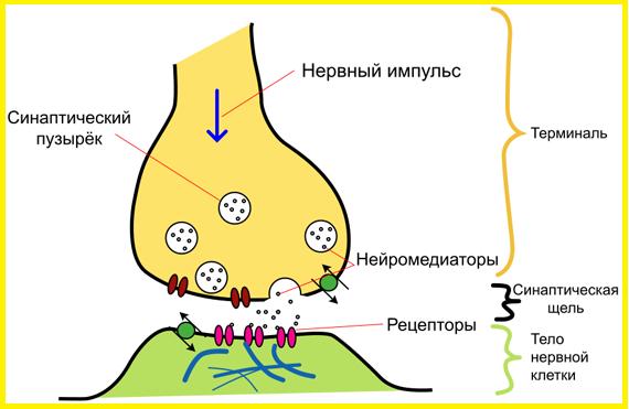 Нейромедиатор